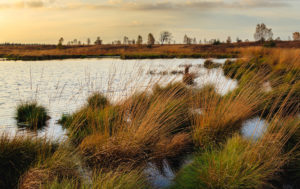 Editorial: Protect coastal wetlands to fight floods, pollution