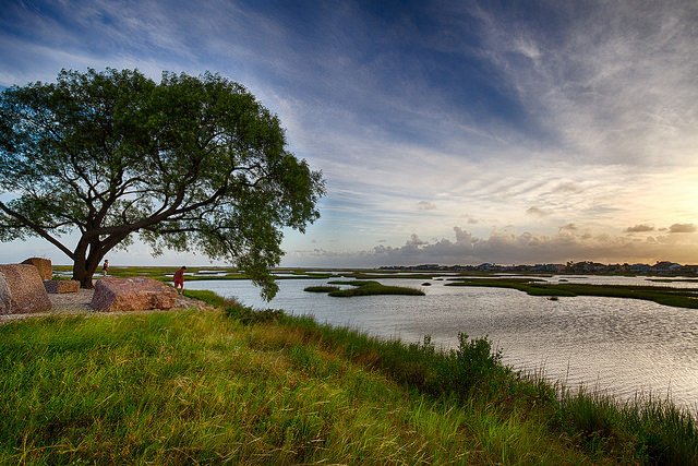 Texas' Wetland Forests Worth $53.9 billion
